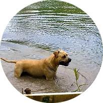 pension vacances pour chien, balade en rivère